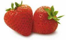 U-Pick Strawberries | UPick Strawberries | Strawberrys | Berrien County | Southwestern Michigan